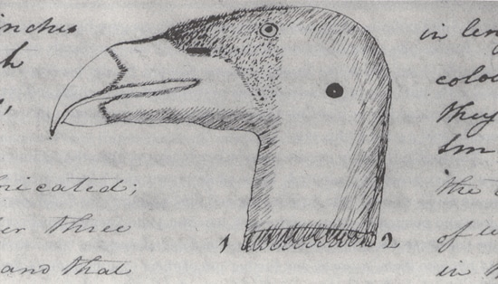 lewis clark journals notebooks condor bird drawing