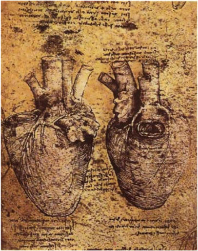 Da Vinci notebook about drawings of human heart.