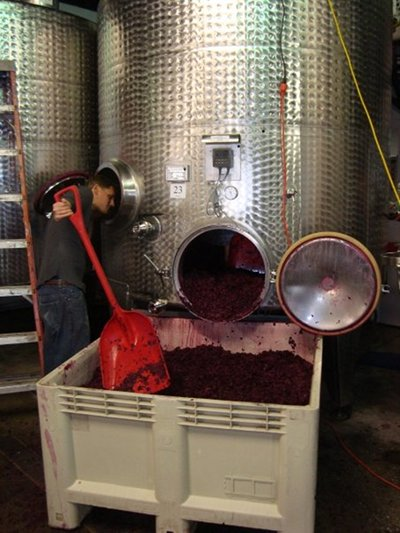 wine fermenter large container of red purple grapes