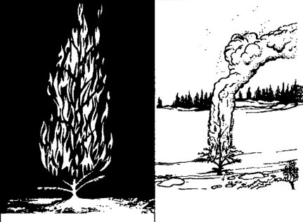 Burning fire with tree leaves illustration.