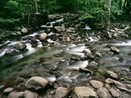 shallow stream river running through forest rocks