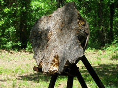 tree stump target for throwing a tomahawk