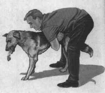 how to perform heimlich maneuver on dog illustration
