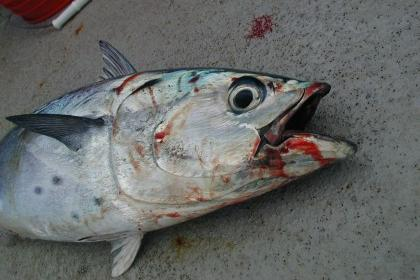 A dead fish on a ground.