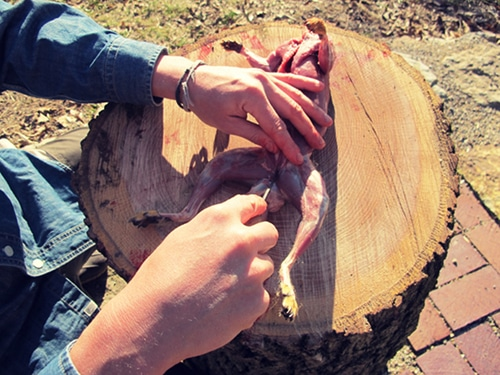 A man splitting the pelvic bone in the center to open up the entire middle of the squirrel.