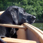 Dog Paddling: How to Take Your Pooch Canoeing