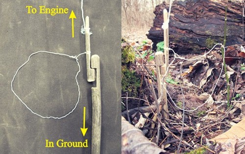 Carved noose for snare hunting in forest.