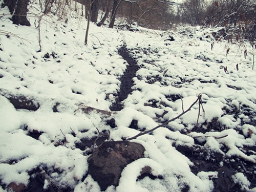 game animal tracks through snow woods