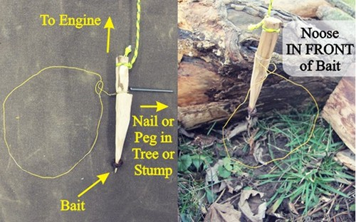 Peg style noose for snare hunting.