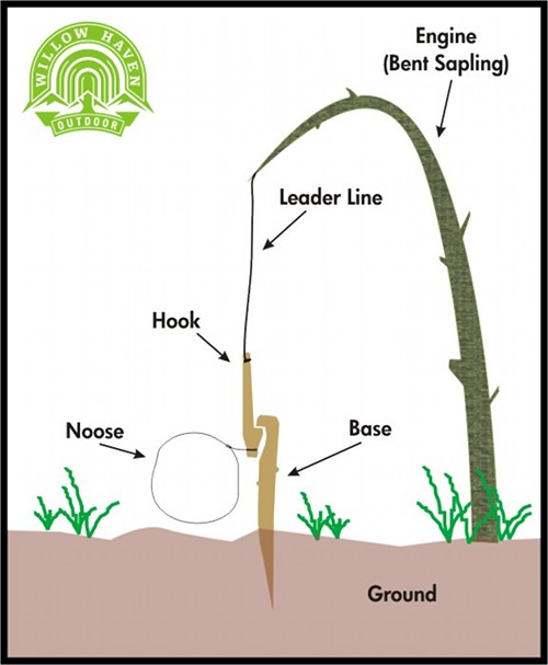 The anatomy of snare hunting illustration.