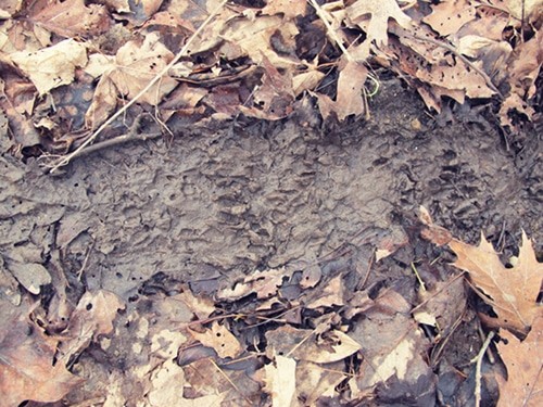 Forest leaves around dirty mud.