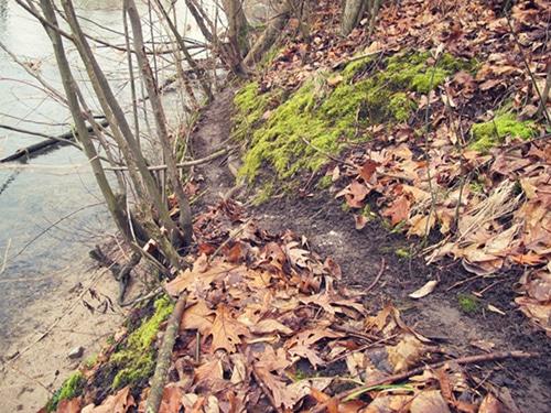Walking way in forest.