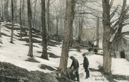 Men cutting tree in the jungle.