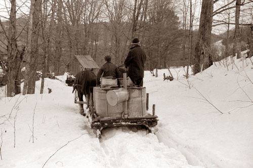 Man loading the sap buckets in horse car in woods.