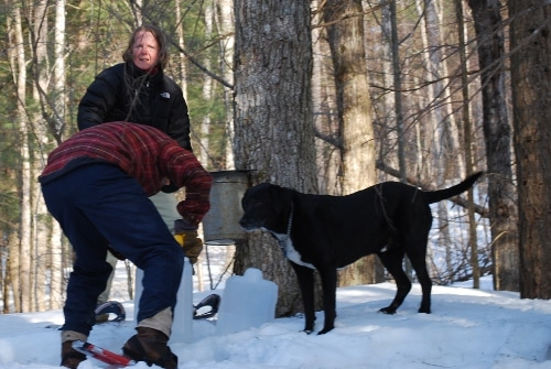 Man transfer the sap into gallon with wife and dog in woods.