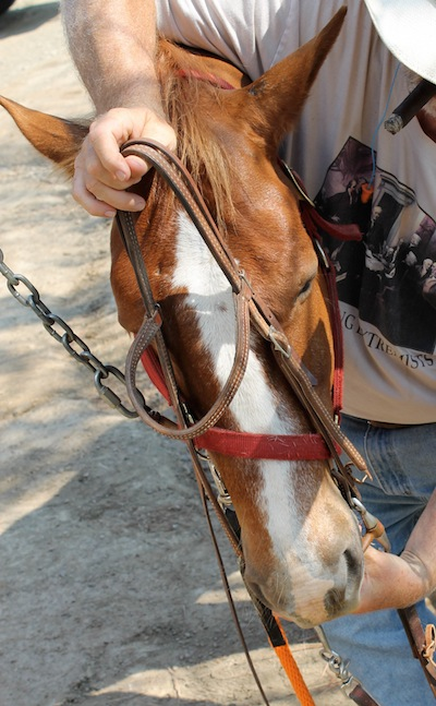 Holding the bridle over the horse's muzzle with right hand and hold the bit in left.