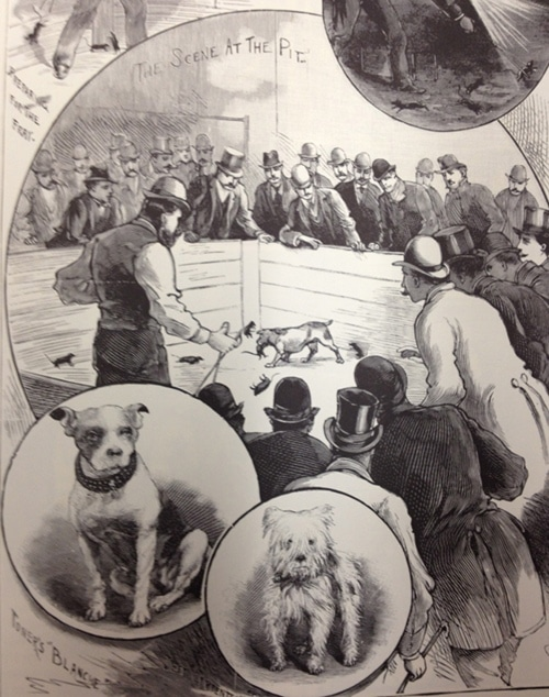 vintage police gazette illustration dog fight