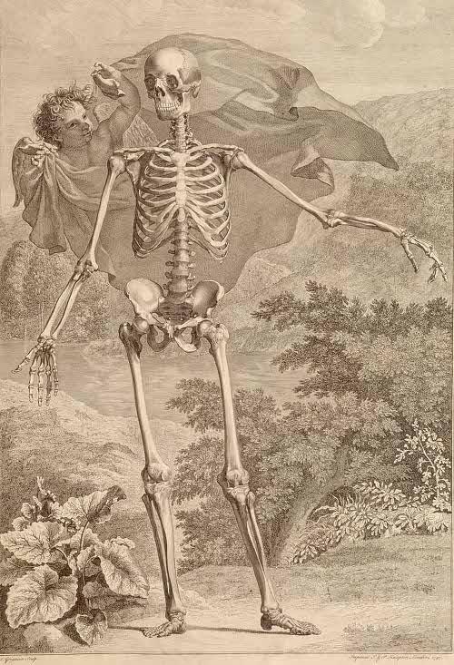 sceleti et musculorum corporis humani by Bernhard Siegfried Albinus, 1749