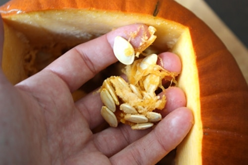 pulling seeds out of pumpkin with hands