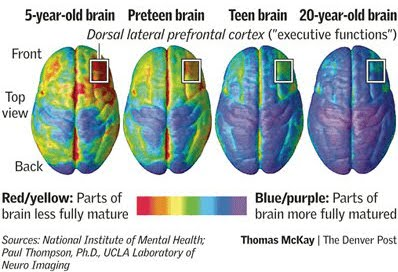 brain scans prefrontal cortex comparison of 5 year old, teen, and 20 year old brain