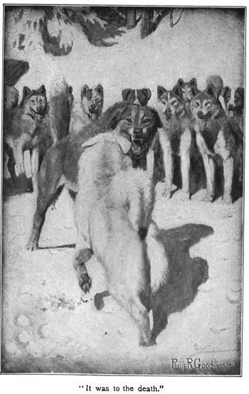 White fang illustration white dog fighting black wolf.