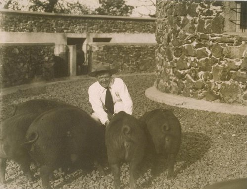 Jack london and his pigs at Beauty Ranch.