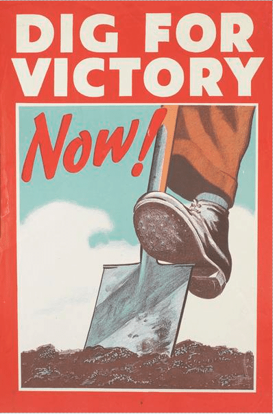 Vintage gardening poster 1950s dig for victory now.