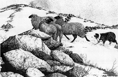 illustration sheepdog leading herding sheep across valley