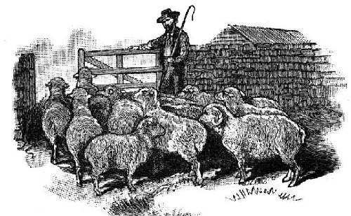 illustration shepard herding flock of sheep