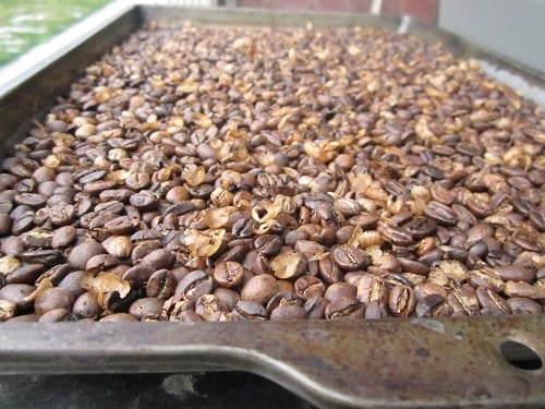Roasted coffee beans in a tray.