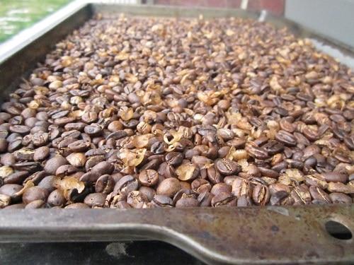 Vintage coffee beans turning brown.