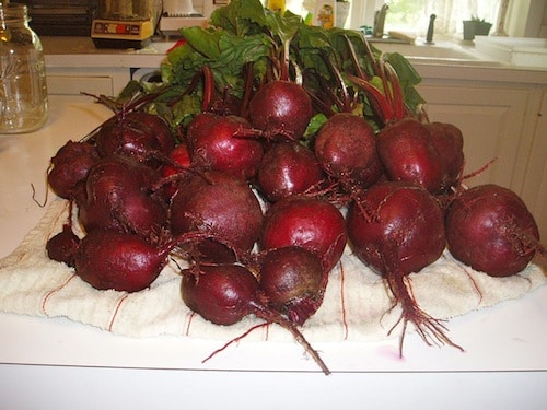 pile of fresh picked red beets