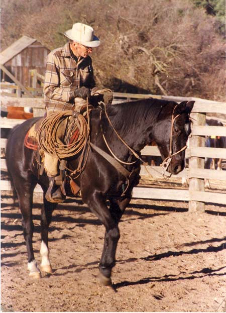 Old cowboy rancher riding black horse.