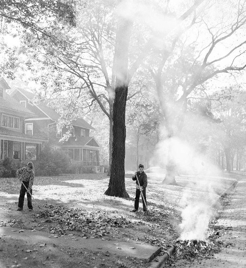 Vintage boys raking leaves in the fall.