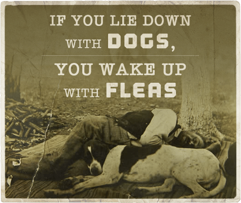Lie down with dogs wake up with fleas aphorism.