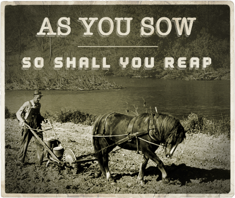 as you sow so shall you reap aphorism
