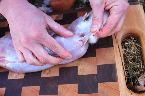 rabbit-cut-through-tail
