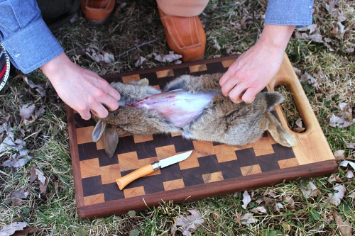 rabbit being skinned field dressed