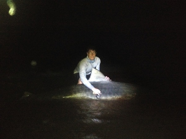 "If you ever graduate to the big boys — see this blurry photo of a 12'3"" tiger shark that Warren caught in Florida this summer — you'll need even bigger hooks. This one was caught with a 20 aught hook."