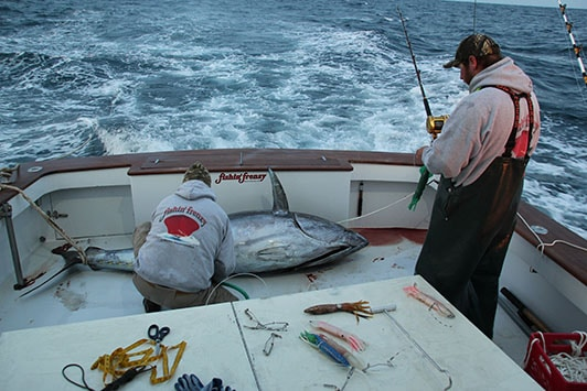 professional tuna fisherman with fish on boat