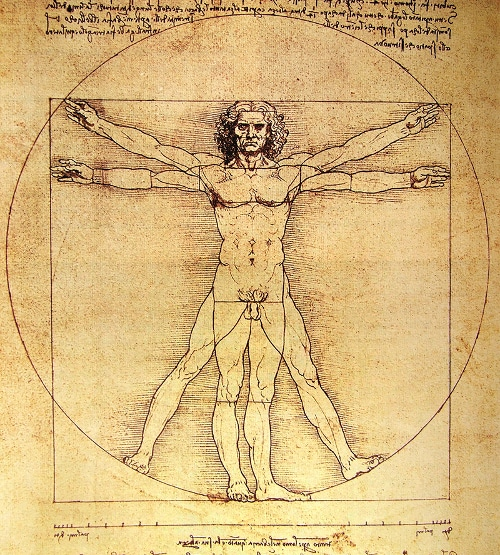 vitruvian man on parchment paper illustration