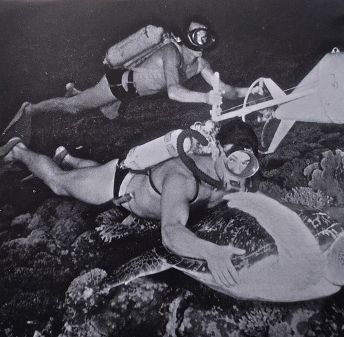 vintage scuba divers under water with large sea turtle