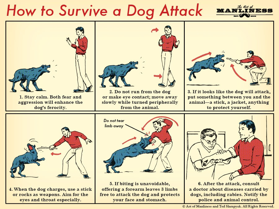 How to survive a dog attack illustration.