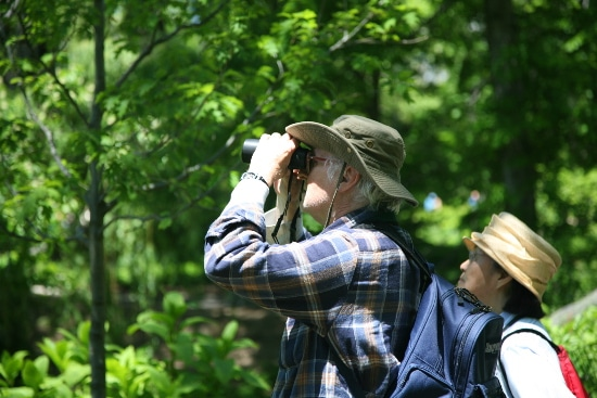 old man looking through binoculars for birds