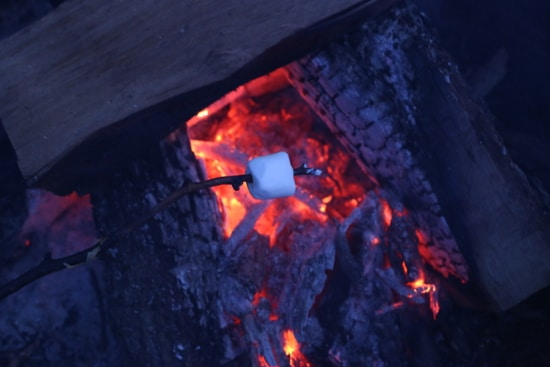 Marshmallow cooking on stick over fire.