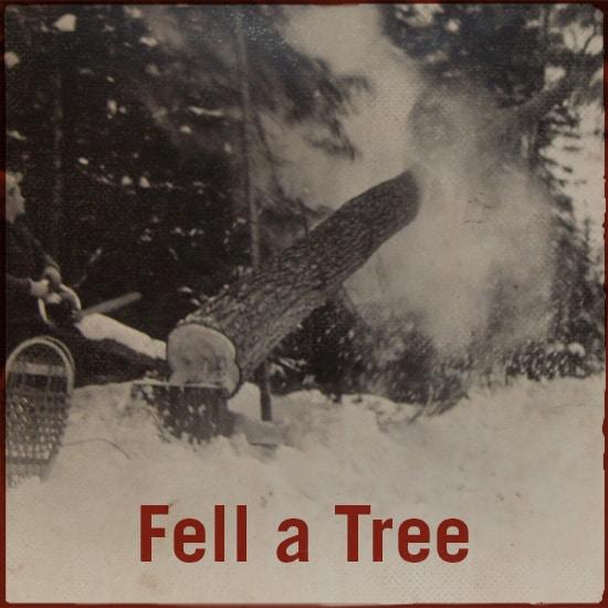fell a tree