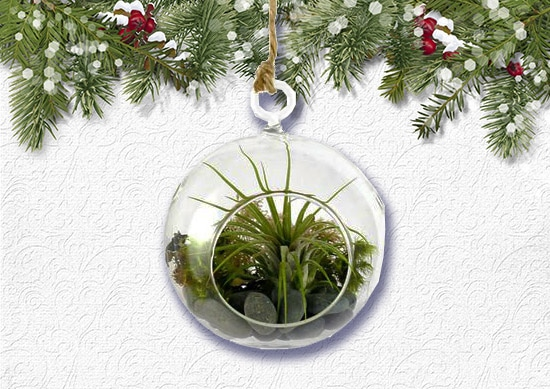 DIY Hanging Air Plant Kit with white Christmas Background.