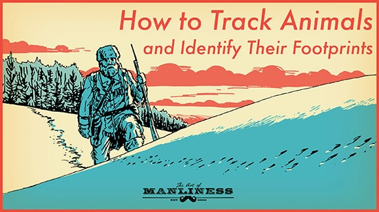 How to track animals and identify their footprints illustration.