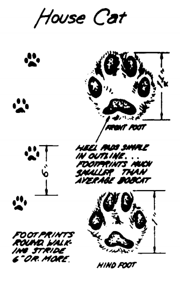 house cat footprints identify animal tracks illustration
