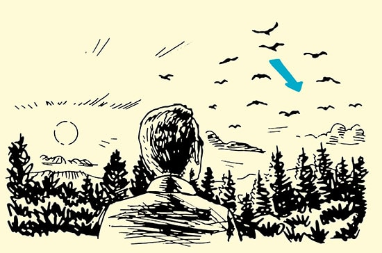 man watching bird flight path in forest illustration